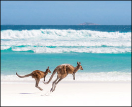 What would lift your day more than kangaroos skipping along a sun drenched beach? A wonderful printed glass kitchen splashback. These printed glass kitchen splashbacks will suit any kitchen colour scheme or design as long as you love animals.